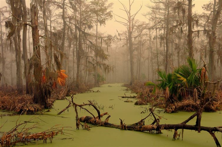 Scenes from a swamp