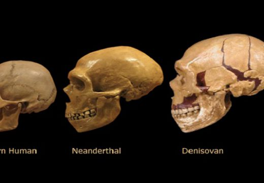 Denisovan DNA Still Part of Modern Human Gene Pool