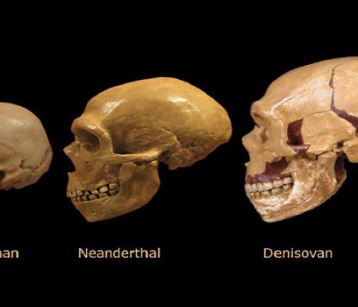 Denisovan DNA Still Part of Modern Human Gene Pool