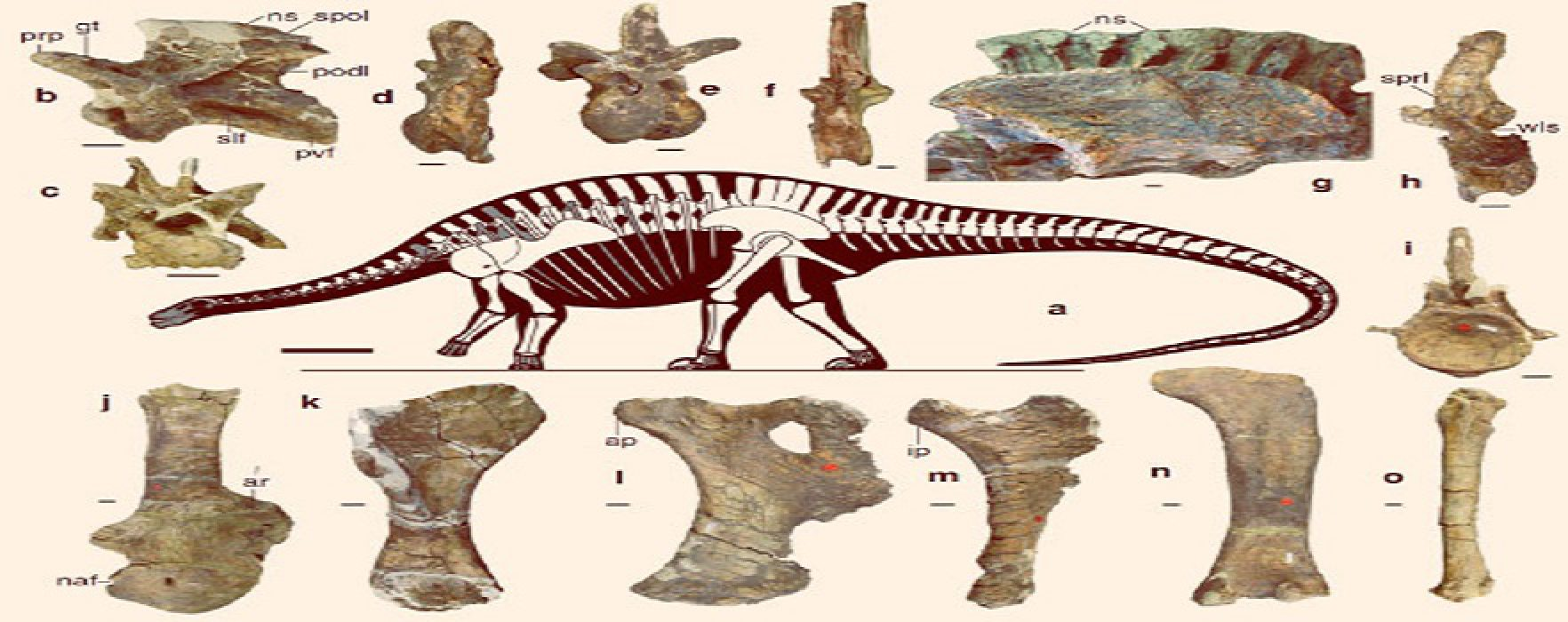 New Dino Find Pushes Back Date of Sauropod Origins